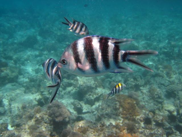 actividades-reserva-marina-mnemba-zanzibar