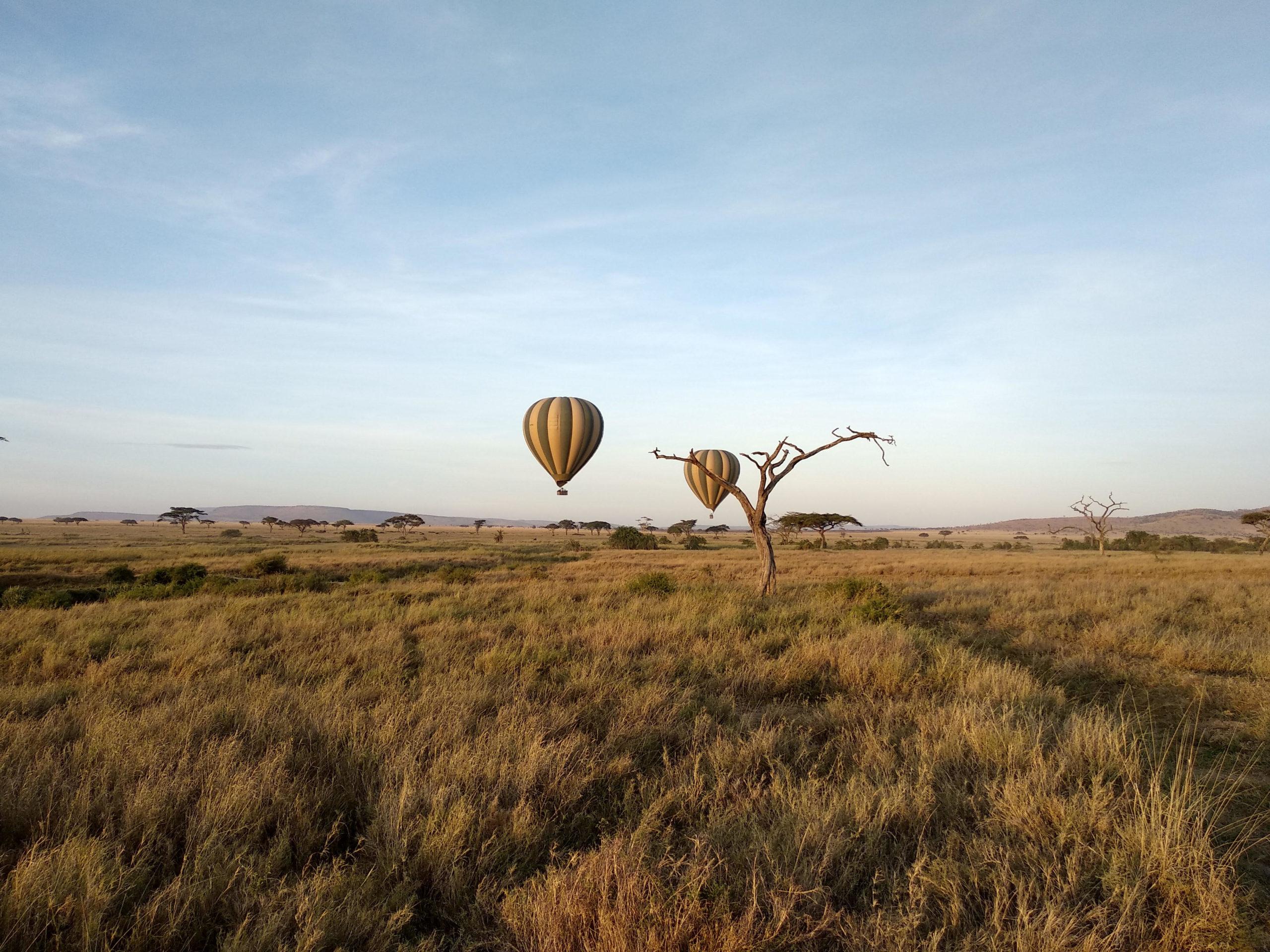 safari-10dias8